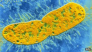 Battling the bacterial threat to modern medicine